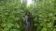 Environmental Costs of Hemp Prohibition in the United States