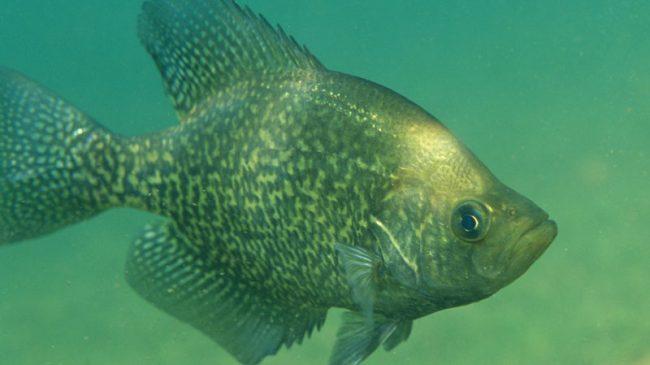 Fishy Business in Montana