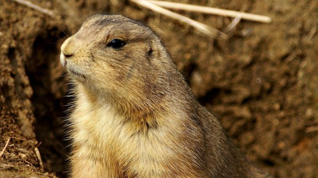 In Recent Prairie Dog Case, the Federal Government Admits Something it Tries to Cover-Up