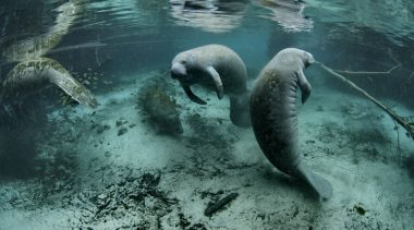 Florida Is Making Mistakes With Endangered Species Act