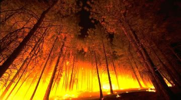 Adding Fuel to Forest Fires