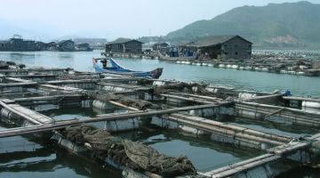 Opportunities and Regulatory Challenges for U.S. Marine Aquaculture Development