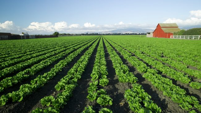 Reason Foundation Supreme Court Amicus Brief: Horne v. U.S. Department of Agriculture