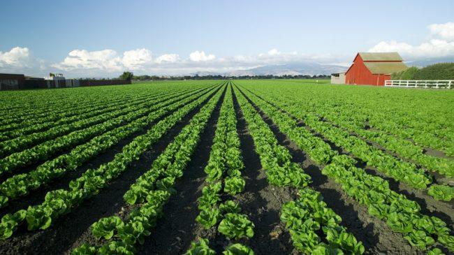 Delano Farms v. California, Case No. S226538