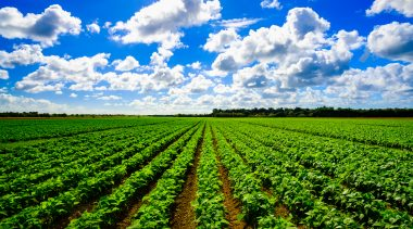 How Burdensome Regulation Obstructs Hunger Relief