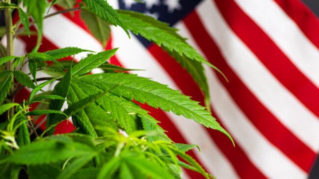 State Marijuana Regulators Send Congress Cannabis Market Recommendations