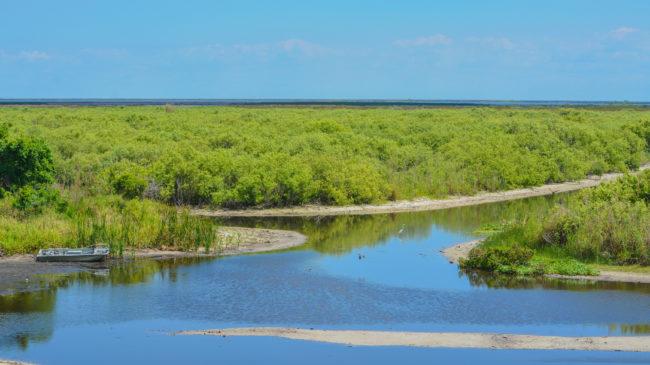 Florida Legislation Addresses Toxic Blue-Green Algae Blooms