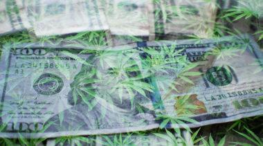 Do Marijuana License Fees Help Keep the Black Market Going?