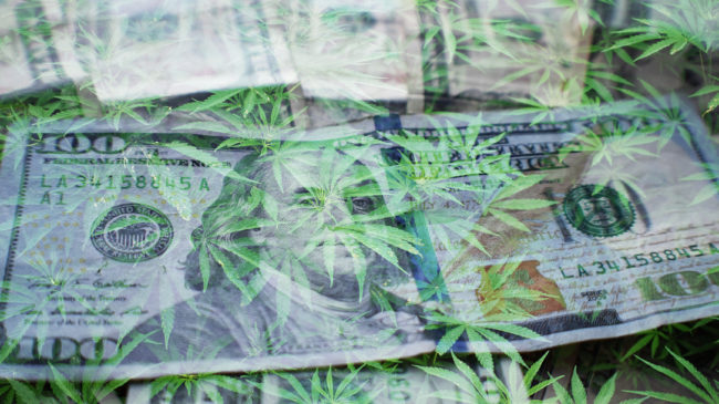 Do Marijuana License Fees Help Keep the Black Market Going?