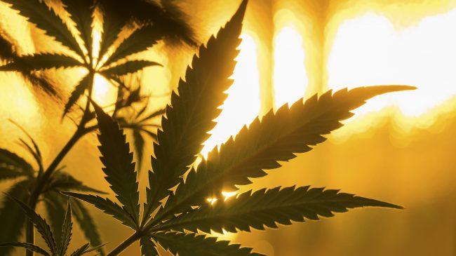 Does Legalizing Marijuana Reduce Crime?