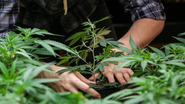 New Jersey's Ill-Advised Rush to Implement Marijuana Regulations