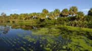 Tackling Florida's Blue-Green Algae Crisis Is Going to Be a Key to Economic Recovery