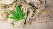 A Comparison of the Proposed Hemp Programs in North Carolina and Florida
